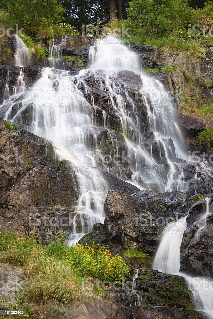 Fiori Gialli Germania.Todtnauer Cascate Con Fiori Gialli Foresta Nera Germania