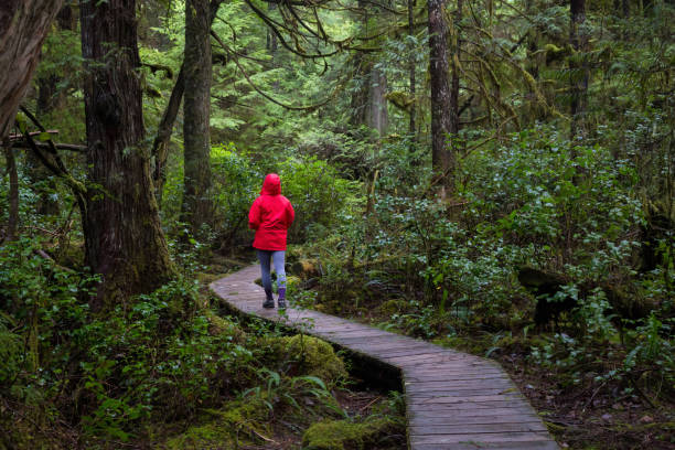 Tofino, BC Girl wearing a bright red jacket is walking the the beautiful woods during a vibrant winter morning. Taken in Ucluelet, Vancouver Island, BC, Canada. vancouver island stock pictures, royalty-free photos & images