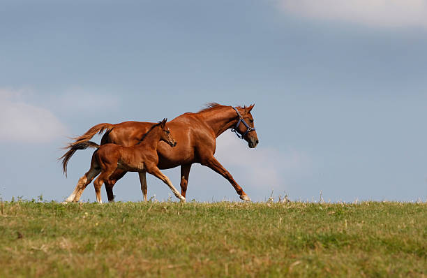 Together  foal young animal stock pictures, royalty-free photos & images