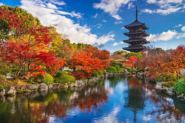 pagoda de toji - kyoto fotografías e imágenes de stock