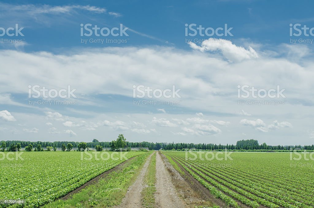 Tokachi countryside stock photo