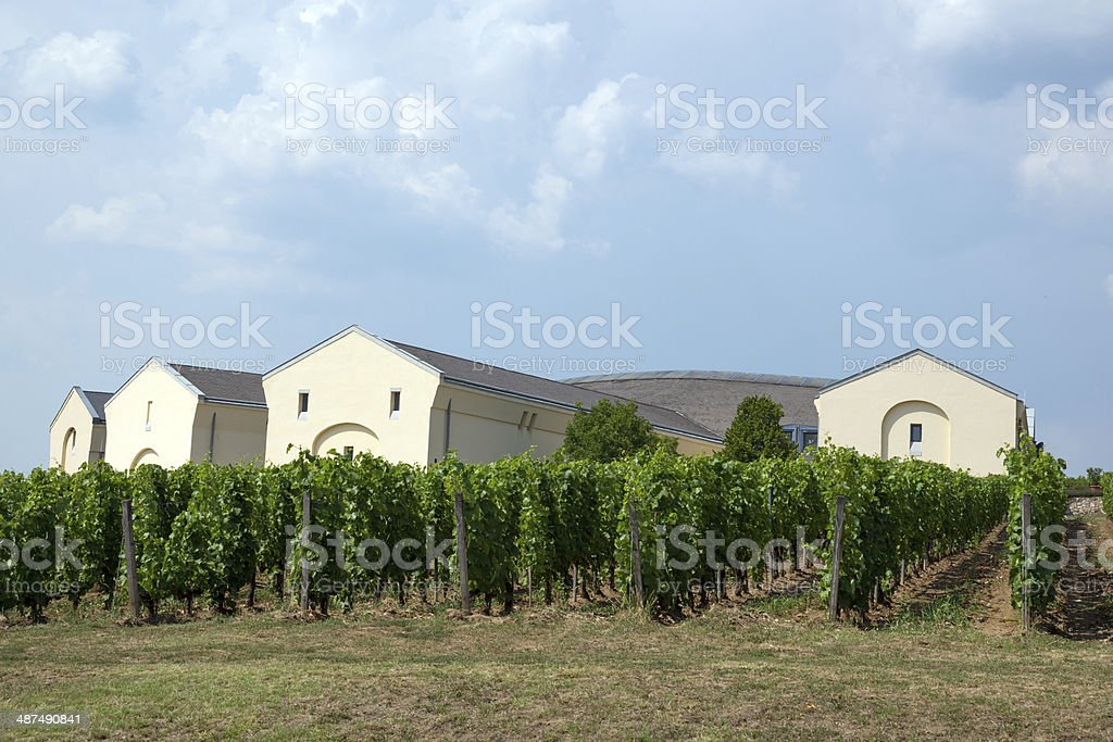 Tokaj Vineyard stock photo