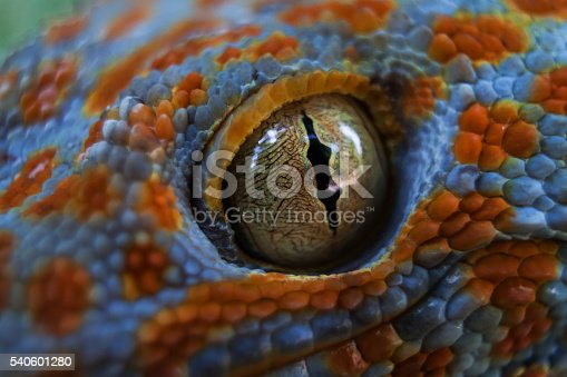 Spotted gecko on a tropical jungle forest. Eye macro