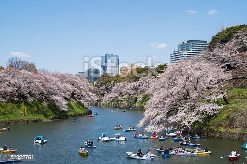 Tokyo cherry blossom season crowded with tourist boat riding
