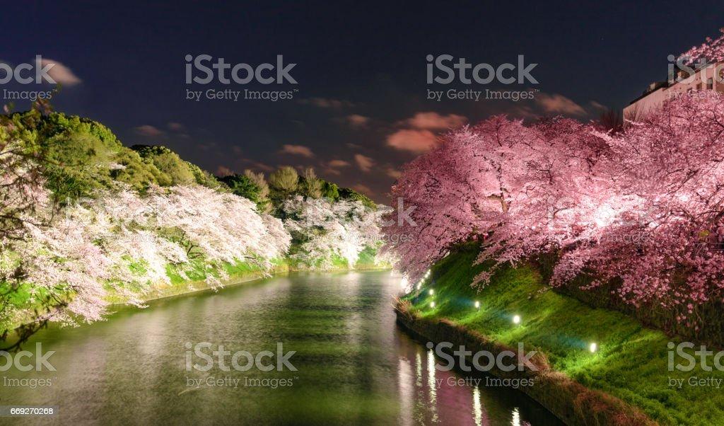 Tokyo, Japan at Chidorigafuchi Imperial Palace moat during the spring season. stock photo
