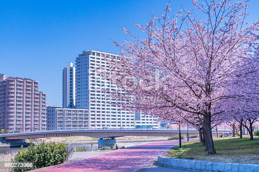 660303034 istock photo Tokyo landscape at spring in Japan (with cherry blossoms) 660273966