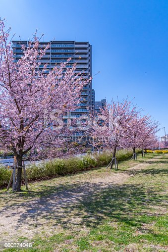 660303034 istock photo Tokyo landscape at spring in Japan (with cherry blossoms) 660274046