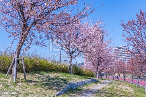 660303034 istock photo Tokyo landscape at spring in Japan (with cherry blossoms) 660274056