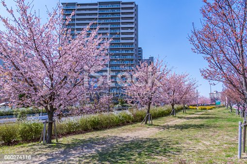660303034 istock photo Tokyo landscape at spring in Japan (with cherry blossoms) 660274116