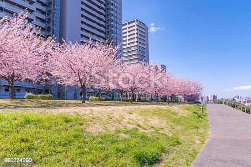 660303034 istock photo Tokyo landscape at spring in Japan (with cherry blossoms) 660274260