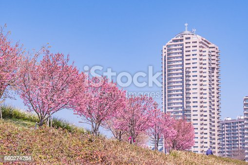 660303034 istock photo Tokyo landscape at spring in Japan (with cherry blossoms) 660274284