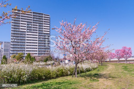660303034 istock photo Tokyo landscape at spring in Japan (with cherry blossoms) 660274292