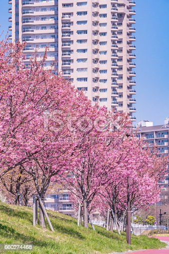 660303034 istock photo Tokyo landscape at spring in Japan (with cherry blossoms) 660274468