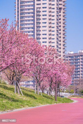 660303034 istock photo Tokyo landscape at spring in Japan (with cherry blossoms) 660274580