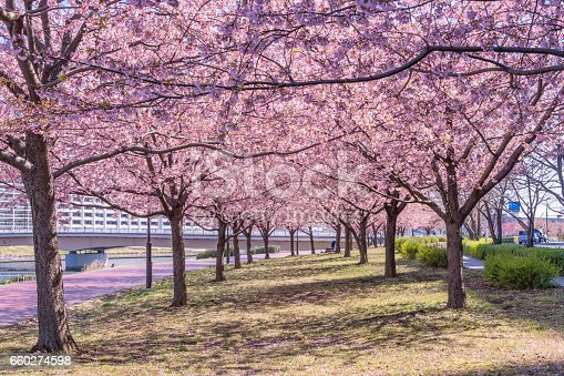660303034 istock photo Tokyo landscape at spring in Japan (with cherry blossoms) 660274598