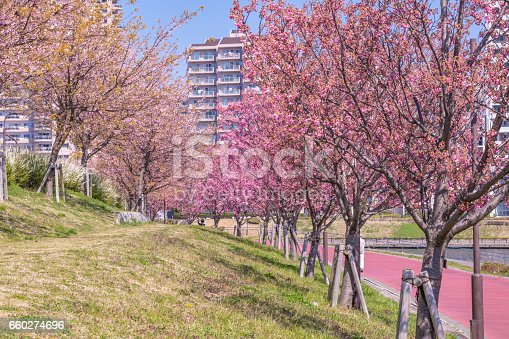 660303034 istock photo Tokyo landscape at spring in Japan (with cherry blossoms) 660274696