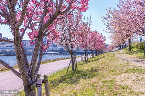660303034 istock photo Tokyo landscape at spring in Japan (with cherry blossoms) 660274726