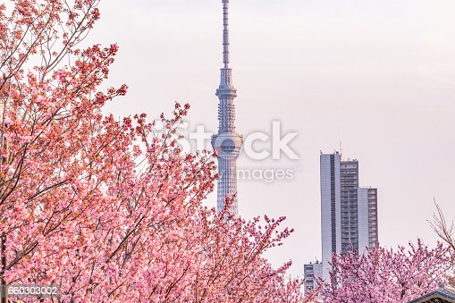 660303034 istock photo Tokyo landscape at spring in Japan (with cherry blossoms) 660303002
