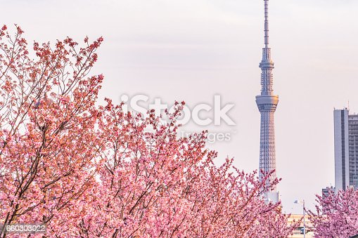 660303034 istock photo Tokyo landscape at spring in Japan (with cherry blossoms) 660303022