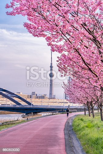 660303034 istock photo Tokyo landscape at spring in Japan (with cherry blossoms) 660303030