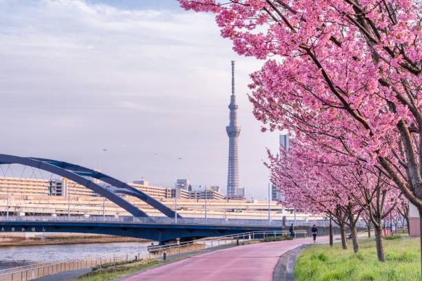 tokyo landscape at spring in japan (with cherry blossoms) - cherry blossoms imagens e fotografias de stock