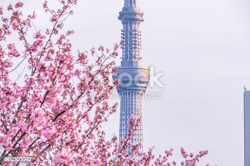 660303034 istock photo Tokyo landscape at spring in Japan (with cherry blossoms) 660303042