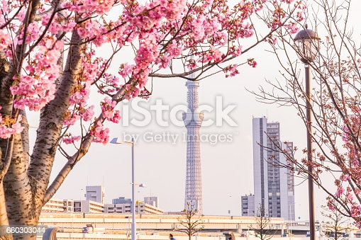 660303034 istock photo Tokyo landscape at spring in Japan (with cherry blossoms) 660303044