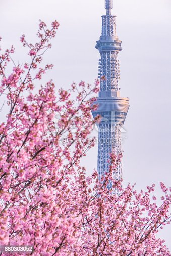 660303034 istock photo Tokyo landscape at spring in Japan (with cherry blossoms) 660303052