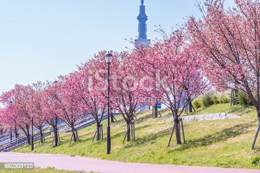 660303034 istock photo Tokyo landscape at spring in Japan (with cherry blossoms) 660303122