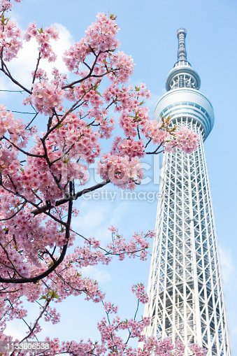 istock Tokyo Sky Tree and cherry blossom during spring at Japan. 1133606538