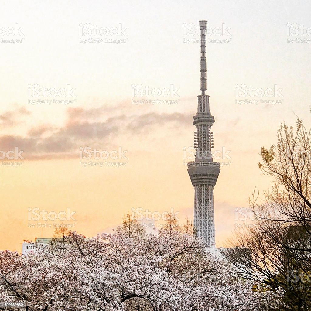 Tokyo Sky Tree with Blossoms stock photo