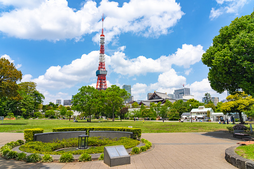Tokyo Tower from Green lawn in Shiba Park