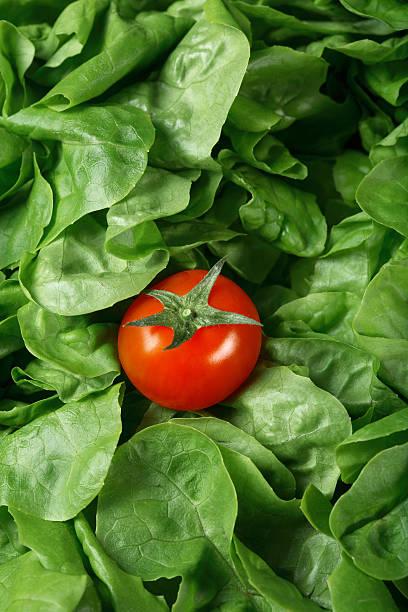 Tomaten und gelockter Salat – Foto