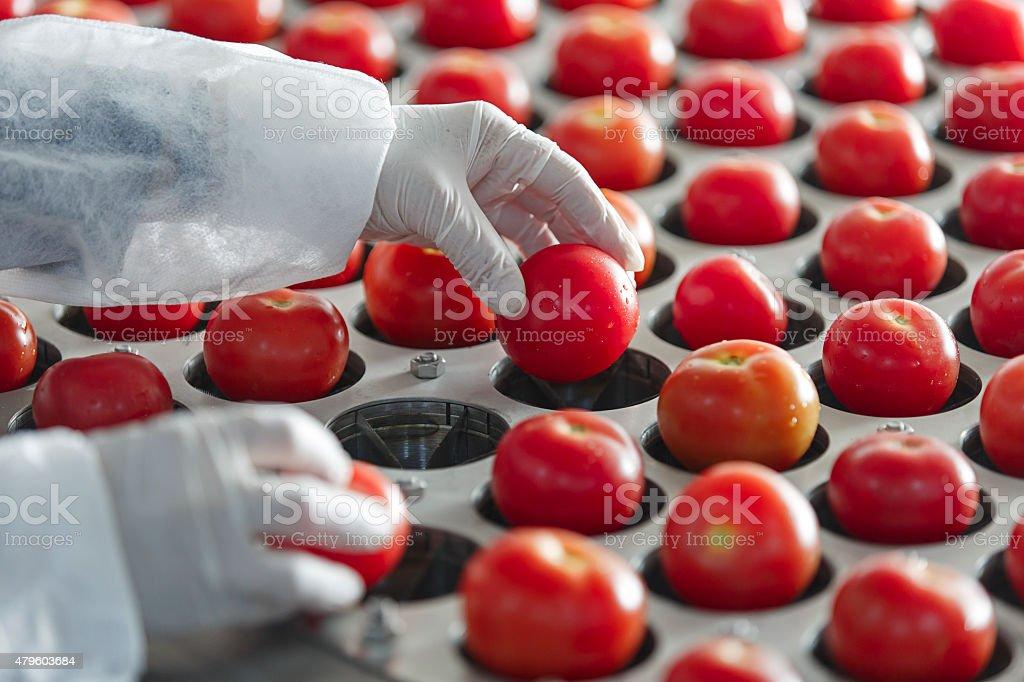 Tomate machine de découpe - Photo