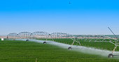 Tomato field irrigated by a pivot sprinkler system in Qatar