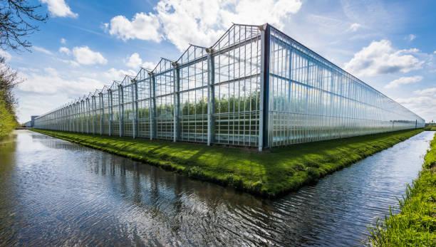 tomato greenhouse harmelen - оранжерея стоковые фото и изображения