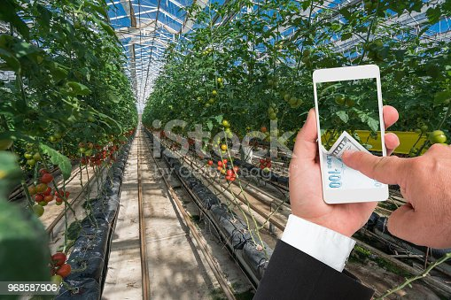 Tomato in greenhouse businessman using smartphone with online payment