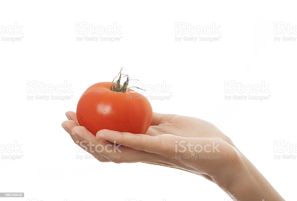 tomato in hand, isolated on white background royalty-free stock photo