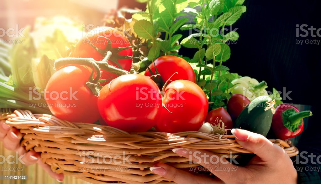 Tomato in wicker basket in hands of young girl, basket full of...