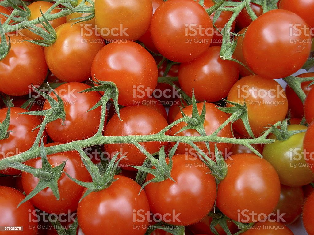 Tomato on vine royaltyfri bildbanksbilder