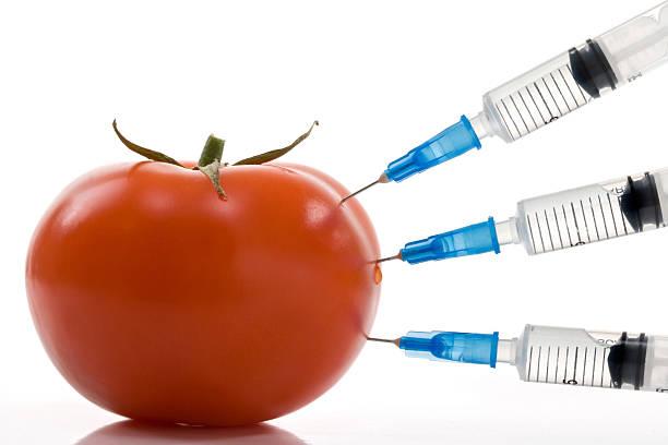 Tomate – Foto