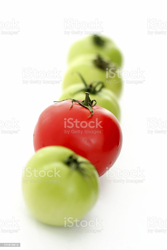 tomato series-same but different royalty-free stock photo