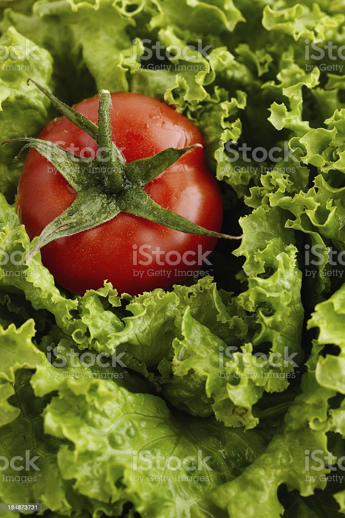 Tomato with fresh lettuce royalty-free stock photo