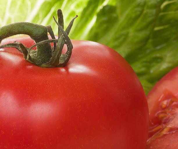 Tomato with Lettuce stock photo