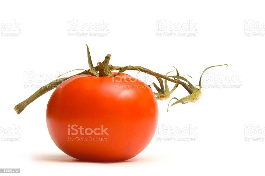 Tomato with Stem royalty-free stock photo