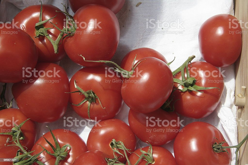 Tomato with stems royalty-free stock photo