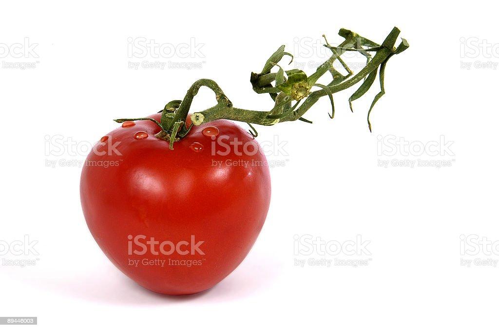 tomato with vine royalty-free stock photo