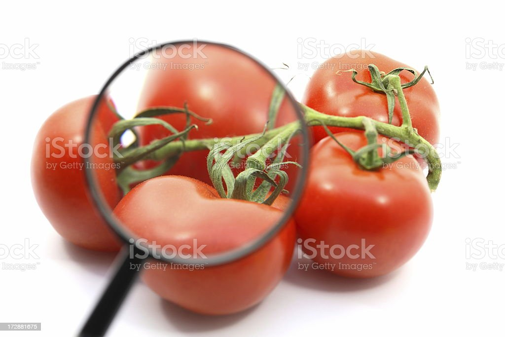 Tomatoes and Magnifier royalty-free stock photo