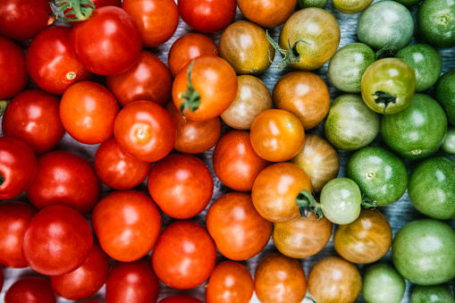 Green tomatoes fade to yellow, to orange, to bright red, illustrating the ripening process of a cherry tomato.