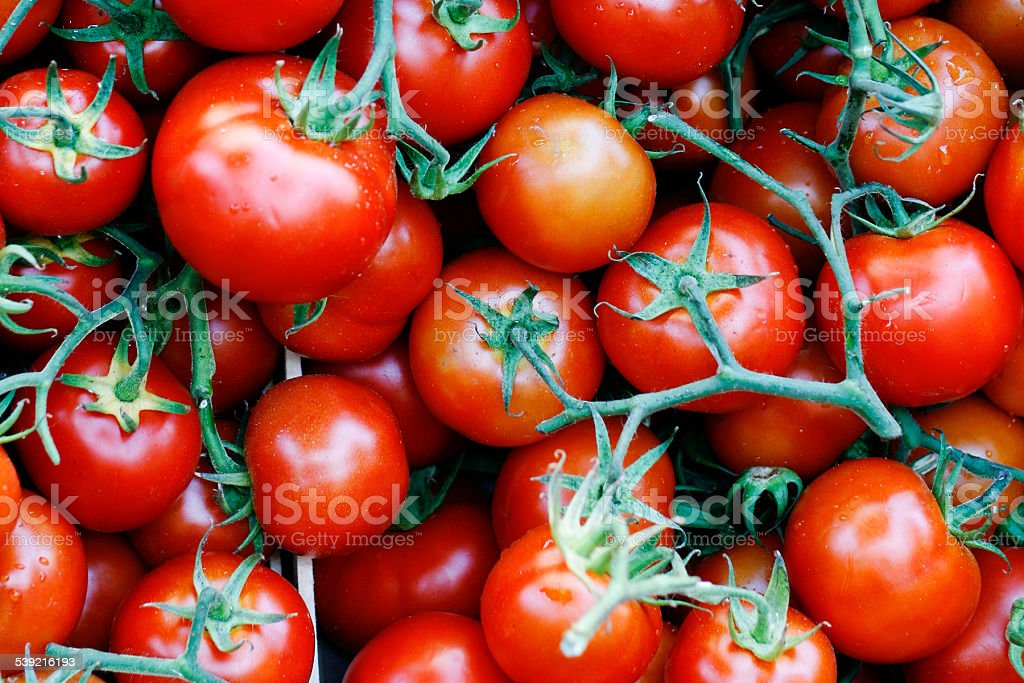 tomatoes at the market stock photo